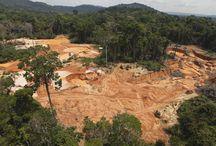 palm oil podklady