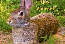 Judy's Nature Memes / Fun photos of nature