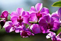 Flower / all variety flower