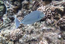 Fish I Saw in Maui