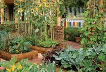 Garden Tips and Design / My edible garden