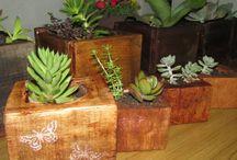Plantas maravillosas y decorativas