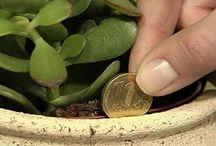 plantas q atraen dinero