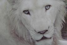 Photos - Beautiful Animals