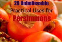 Persimmons / by Amy Head