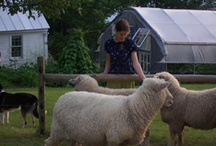 Vermont Grand View Farm / VT Grand View Farm is home to a flock of Romney sheep, and Vermont's first yarn CSA (Community Supported Agriculture) share. The Goodling family offers registered Romney sheep,Farm Stays, and fiber art classes and retreats.