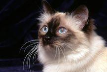 fotos de gatos