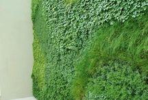 zeleň v interiéru