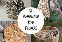 Feathered friends / ideas for Bird feeders