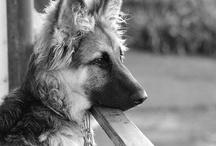 doggies ❤️