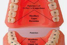 Dentist Graduationcard / Steffi