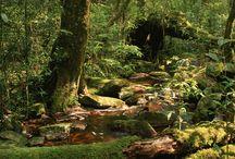 JungleScene