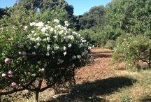 Casa Rosa Garden