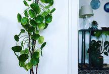 Huonekasvit