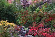 Autumn / Fall leaves in Sedona, Arizona