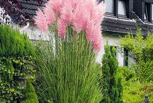 Krekeltuin border pink
