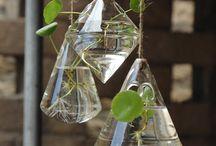 houseplants and ideas / houseplants