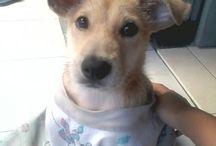 Cute Puppy / It's my beloved Milo's gallery
