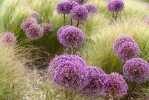 accostamenti botanici significativi