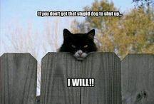 kill Cat
