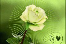 A virágaim  ++