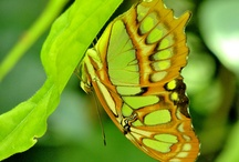 Beautiful Creations ~ Winged Creatures / by Simone