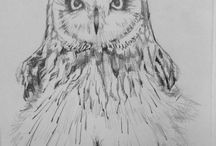 Owl and animal / Owl