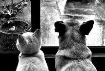 Cats &dogs/ 개와고양이