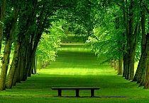 trees, wood, bushes +