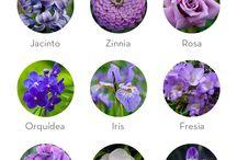 le mois des fleurs