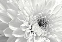 photos- Stockfree