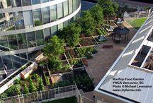 * roof garden *