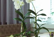 Növények-virágok-fűszerek