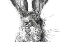 Hares here