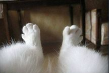 furry feet.