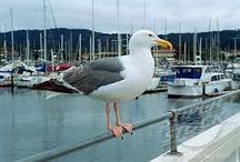 Seagull / by Bird B Gone, Inc.