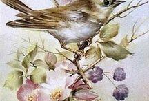 рисунки птиц бабочек цветов