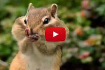 videos :)