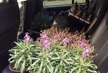 Gardening / Gardening inspiration, tips, tricks & images from our own garden :)