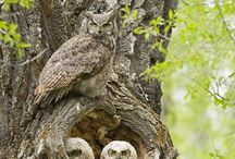 Beautiful Animalia / Beautiful Animals and Animals I Love