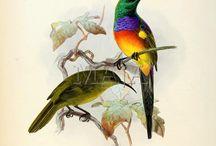 Bird Illustrations / ideas for me