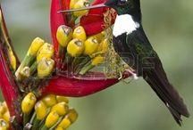 colibries de ecuador