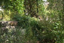 Garden - Australian indigenous gardens