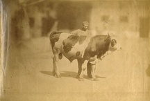 Oh Best Beloved....... / A vintage photographic record of our relationship with animals / by A Bolton