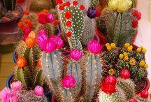 Flower + plants