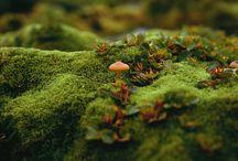 Emerging Woods