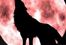 Wolves :-*