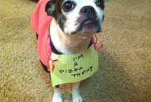 Best of Dog Shaming / by Gari-Ann Lenore