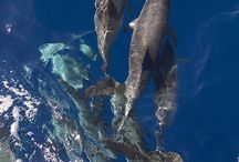Dolphin and whalewatching