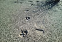 Animal Tracks and the Art of Tracking / Discovering nature and wildlife through the art of seeing.